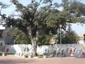 Piazza I maggio con albero monumentale - Foto di Roberto Bullita